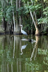 Morning on the Dora Canal, Florida