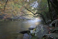 October Morning on the Little River, Smokies, Tennessee