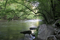 Spring Morning on the Little River, Smokies, Tennessee